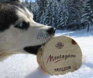 La boite a montagne  - chiens polaires