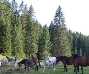 Ferme equestre du berbois