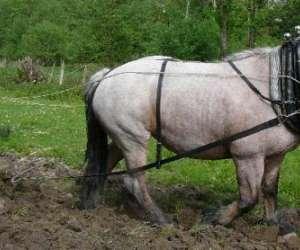 Jardins  et  chevaux -  découverte de latraction animal
