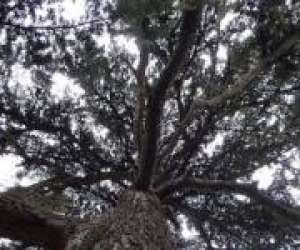 L'association l'arbre aux oiseaux  - therapie développe