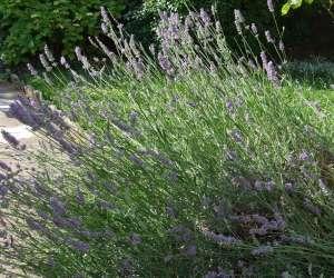 Association « reprendre souffle » relaxation et fleurs