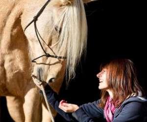 Promenades a cheval pour tous