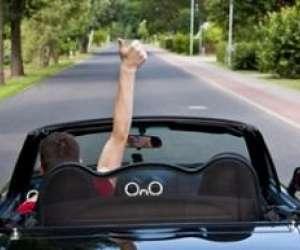 Sécurité routière formation