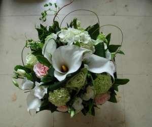 Goli fleurs