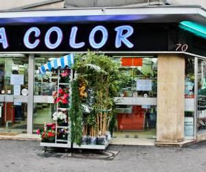 Zola color
