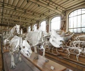Muséum national d