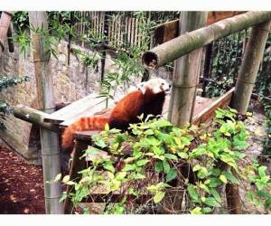 parcs animaliers et zoos ozoir la ferriere 77330. Black Bedroom Furniture Sets. Home Design Ideas