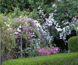 Jardin d
