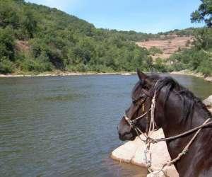 Ferme equestre du griou