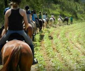 Salles sud équitation - poney-club