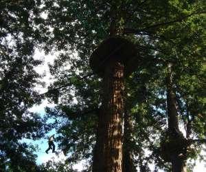 Sequoia vertigo