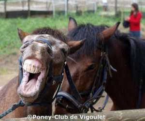 Poney club de vigoulet