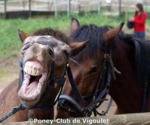 Poney club de vigoulet