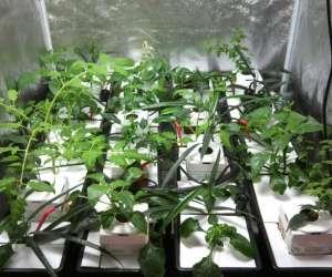 Secret door garden growshop culture en intérieur midi-p
