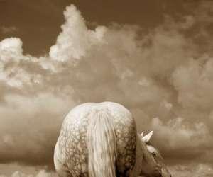 Chariots western du bibal