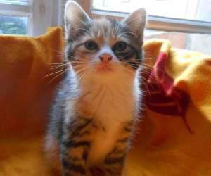 Le chat libre de gaillac cordes et environs