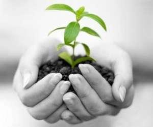 Agoa environnement - assainissement et récupération d