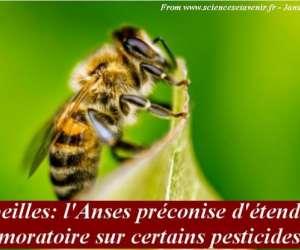 Syndicat apiculteurs midi-pyrénées
