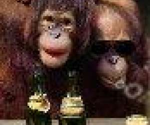 Monkey bar : le bar de la plage