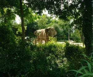 Parc zoologique de la petite hotoie