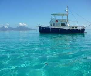 Nemo cruises