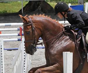 photo La Martingale association Equestre