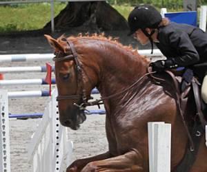 La martingale (association equestre)