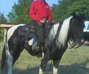 Ferme de la grande plaine, equitation western