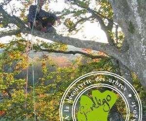 Ginkgo : voyage à la cime des arbres