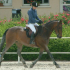 photo Poney Club / Centre �questre Du Moulin
