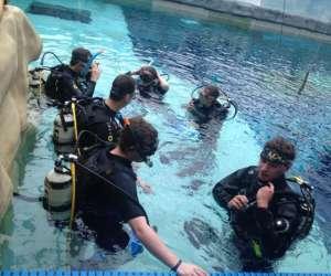 Ecole de plong�e sous-marine divemonkey