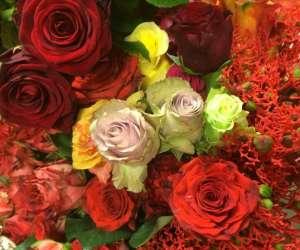 Equateur flowers