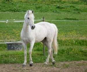 Poney-club & centre equestre des jonquières