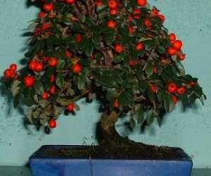Le bonsarium