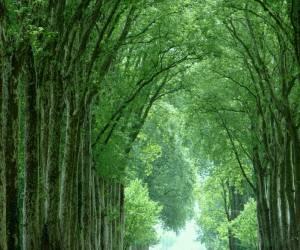 La trouée verte
