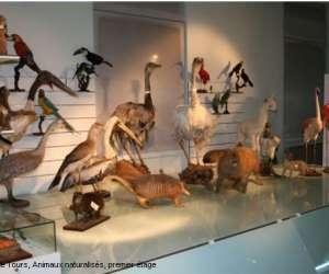 Muséum d