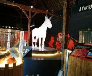 Sitazin, le musée des Ânes de france