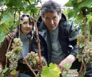 Domaine viticole pascal lambert