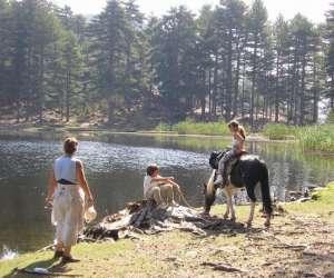 Centre équestre randonnée location anes et chevaux