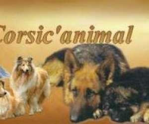 Animalerie corsic