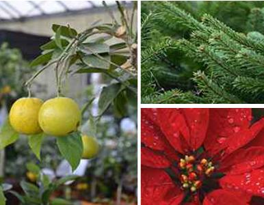 Jardinerie le paradis desjardins montivilliers 76290 for Jardinerie des jardins