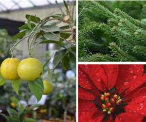 Jardinerie le paradis desjardins