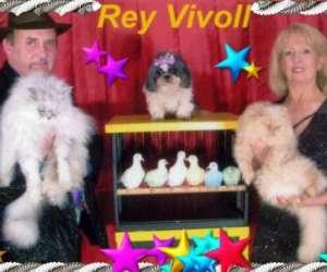 Rey vivoll artiste magicien