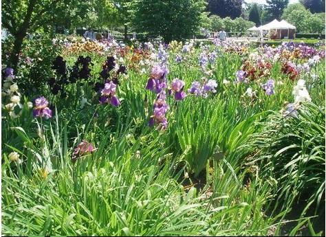 Le jardin des plantes rouen 76100 t l phone horaires et avis - Adresse jardin des plantes rouen ...