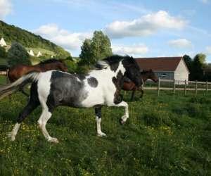 Ferme equestre de muchedent