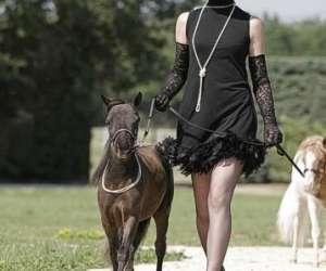 Petit cheval en f�te