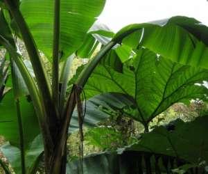 Le jardin jungle