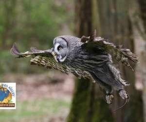 Le bois des aigles naturama
