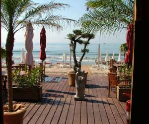 Palm ray plage