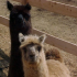 photo Ferme Zoo De Bouzigues